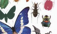 세계 곤충 탐험