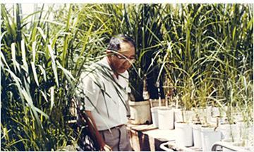 통일벼를 개발한 식물육종학자