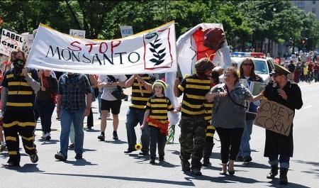 [사이언스타임즈] 'GM농업왕국' 몬산토 최대 위기