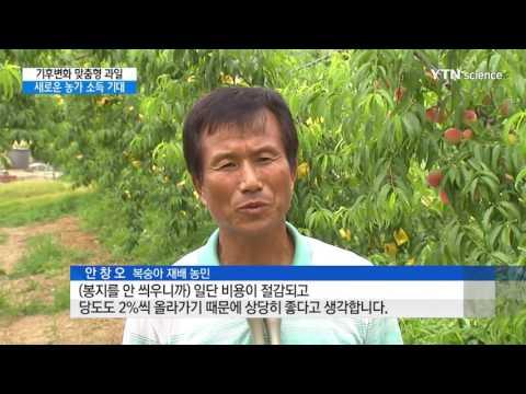 [사이언스 TV] 기후변화에 맞춘 과일 농가소득 '효자'