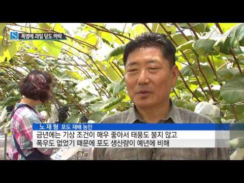[사이언스 TV] 더운 날씨가 과일 맛도 떨어뜨렸다