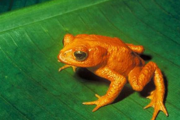 기후변화가 동물 멸종 가속화