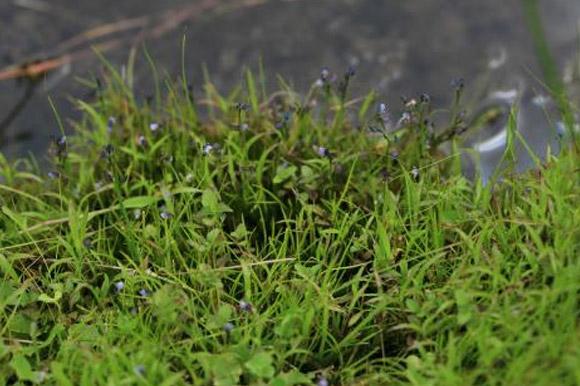 보일 듯 말 듯 작은 식충식물, 자주땅귀개