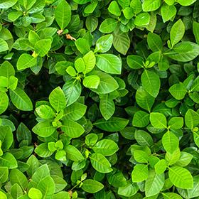 뿌리와 잎의 기능, 식충식물, 기능성식물