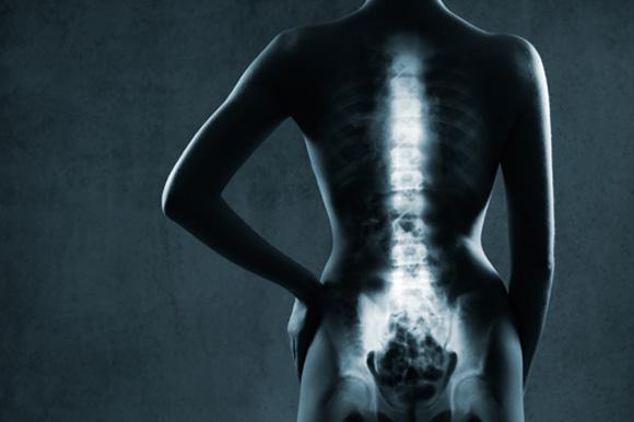 우리 몸을 지탱하는 뼈의 신비