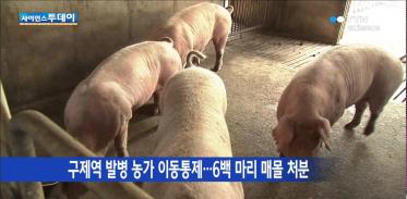 경북 의성 구제역 발생…청정국 지위 상실