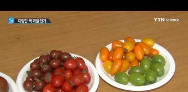 [사이언스 TV] 작고 다양한 색 과일이 몸에도 좋아