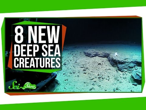 심해의 기이하고 새롭게 발견된 생물 8종