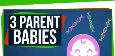 세 부모 체외수정법