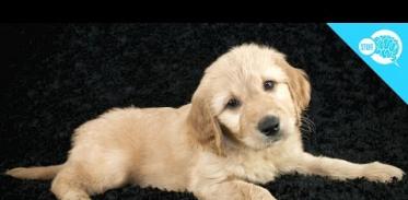 개는 왜 고개를 갸우뚱할까?