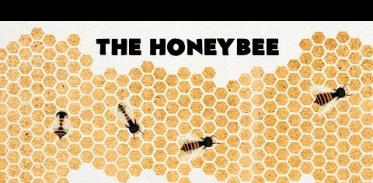 꿀벌들이 6각형을 좋아하는 이유