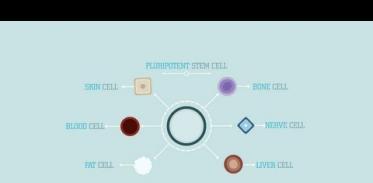 줄기 세포란 무엇일까?