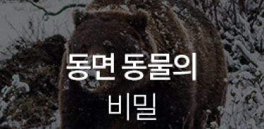 [카드뉴스] 동면 동물의 비밀