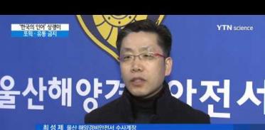 [사이언스 TV] '한국의 인어' 상괭이 올해부터 포획·유통 금지