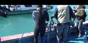 [사이언스 TV] 토종 돌고래 상괭이, 건강찾아 다시 바다로