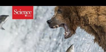 곰이 먹고 노는 것을 보여주는 비디오