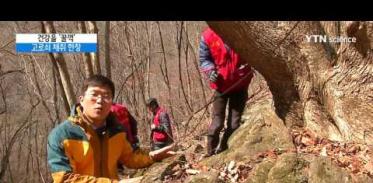 [사이언스 TV] '봄을 마신다' 인제 방태산 고로쇠 채취 한창