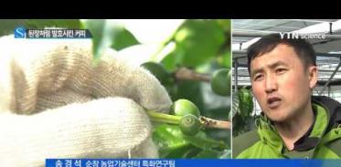 [사이언스 TV] 된장처럼 발효시킨 순창 커피