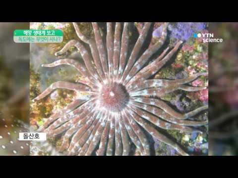 [사이언스 TV] 보물섬 독도의 바닷속을 들여다보다