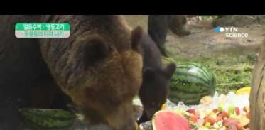 [사이언스 TV] 얼음 수박에 냉동 고기…동물들의 더위 나기