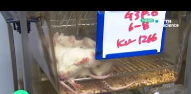 [사이언스 TV] 돌연변이 쥐로 유전 질환 원인 찾았다