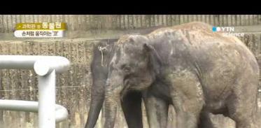 [사이언스 TV] 사람처럼 서로 돕는 똑똑한 코끼리