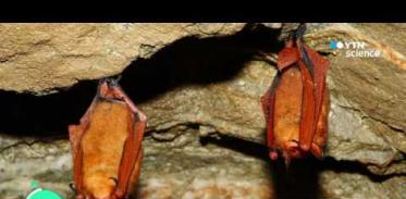 [사이언스 TV] 멸종위기 '붉은박쥐' 유전체 세계 첫 해독