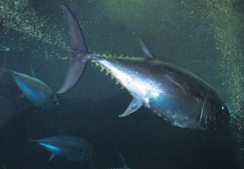 [사이언스타임즈] 지구온난화로 작아지는 물고기
