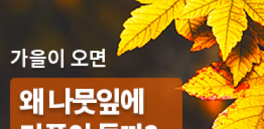 [카드뉴스] 가을이 오면 왜 나뭇잎에 단풍이 들까?