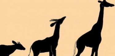 [사이언스타임즈] 기린 목이 길어진 진짜 이유