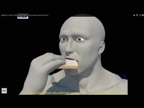 3D로 보는 사람의 소화기관