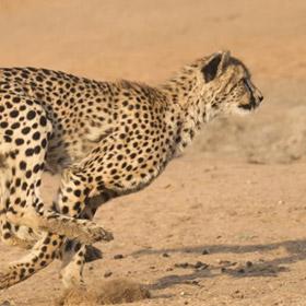 동물과학 - 매우 빠른 동물들