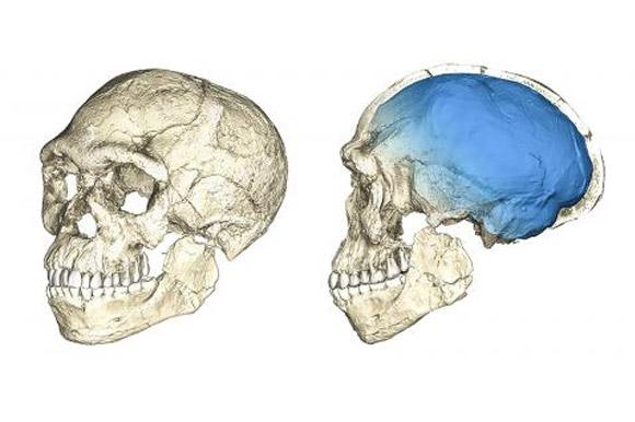 가장 오래된 현생 인류 화석 발견