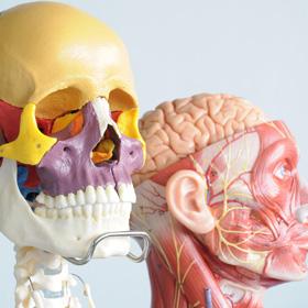 얼굴과 표정의 연결고리 '근육'