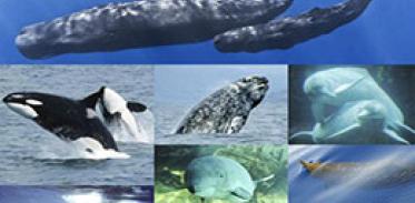 [사이언스타임즈] 고래도 지역 사투리 쓴다?