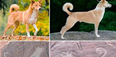 [사이언스타임즈] 개와 함께 사냥하는 암각화 첫 발견