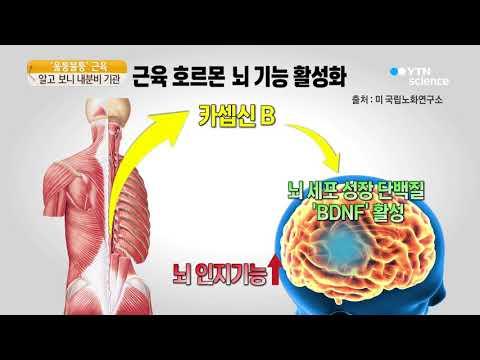 [사이언스 TV] '울퉁불퉁' 근육…알고보니 내분비 기관