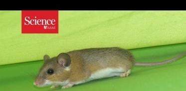 언제 사람이 정착했는지 생쥐가 어떻게 알아낼 수 있을까?