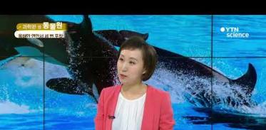 [사이언스 TV] 집단 사냥의 명수…돌아온 범고래