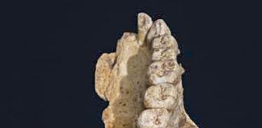 [사이언스타임즈] 현생 인류 '탈아프리카' 5만년 앞당겨