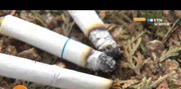 [사이언스TV] 담배 줄이기만 해도 폐암 위험 45% 감소