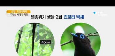 [사이언스TV] 멸종위기종 '산양·긴꼬리딱새' 주왕산 서식