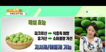 [사이언스TV] 논란은 그만 '초록빛 보약' 매실