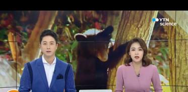 [사이언스TV] 세계 최초 인공수정으로 반달곰 새끼 출산