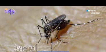 [사이언스TV] 지구상 가장 위험한 동물, 모기