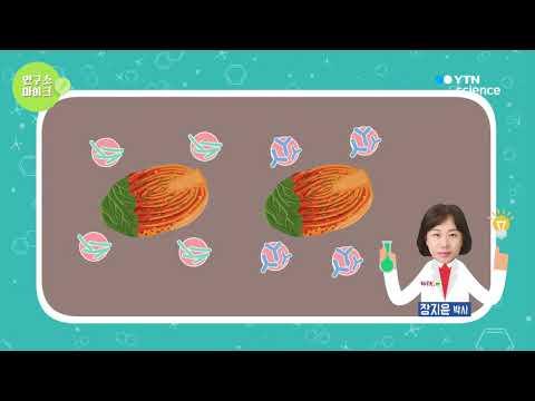 [사이언스TV] 변하지 않는 김치 맛의 비밀, 김치 유산균