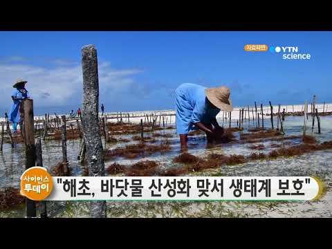 [사이언스TV] 해초, 바닷물 산성화 맞서 연안 생태계 보호
