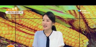 [사이언스TV] 옥수수, 옥수수수염 개수=알갱이 수?