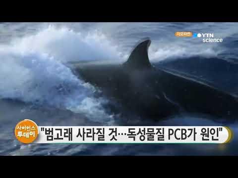 [사이언스TV] 범고래 사라질 것, 독성물질 PCB 원인