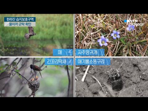 [사이언스TV] 한라산 '숨은물뱅듸' 고산습지 물이끼 산다!